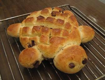 Kaplumbağa Ekmekler – 2